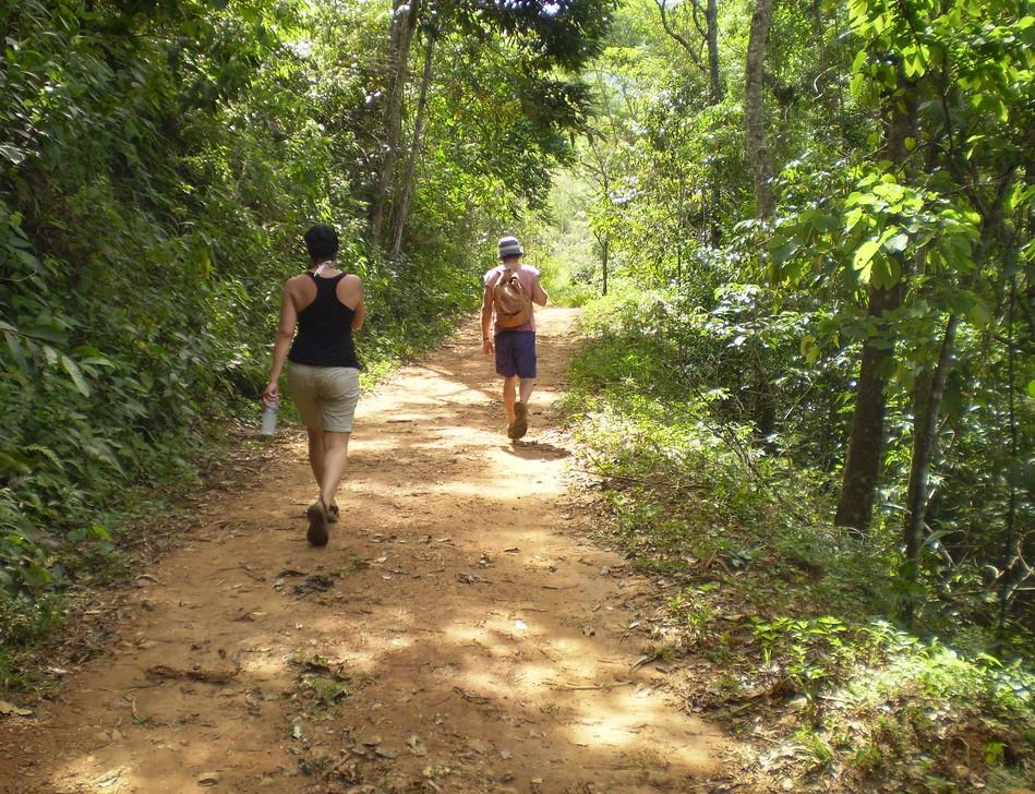Limeria_Trail