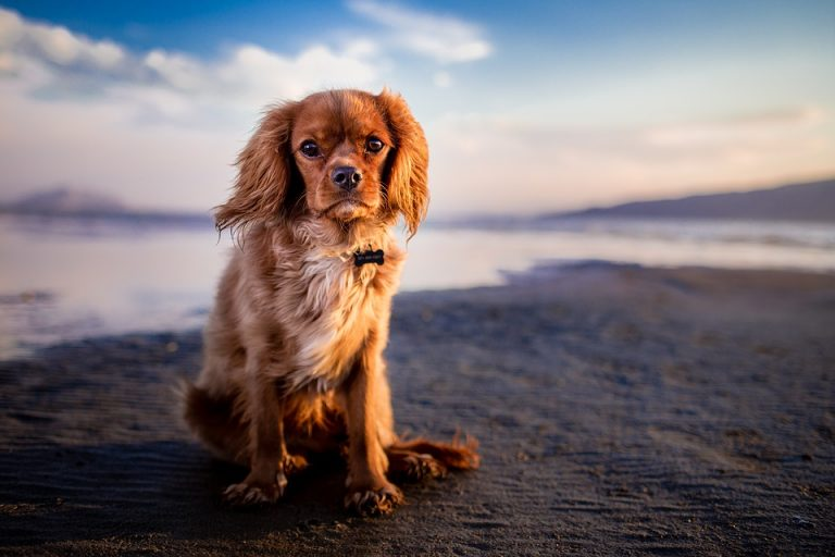 Beaches for Dogs in Cyprus