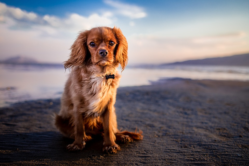 beaches_for_dogs