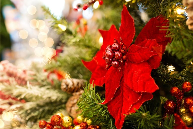 Christmas means Red, Sparkles, Magic and….Poinsettia!